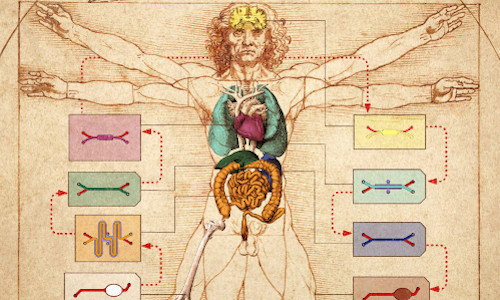 "Wyss Institute's human body-on-chip system is layered on top of Leonardo da Vinci's ink drawing of the ""Vitruvian Man,"" which represents ideal human body proportions"